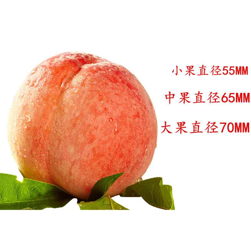 https://xiaoba.shall-buy.com/attachment/images/4663/2019/06/WdISzEOgdb0H8obGs7d577CE575L5z.jpg